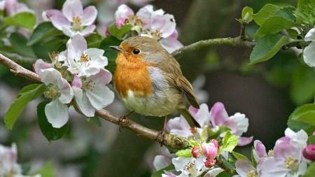 طيور بالصور (7)