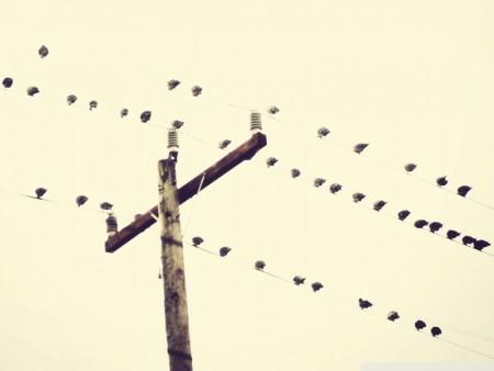 طيور جذابة (4)