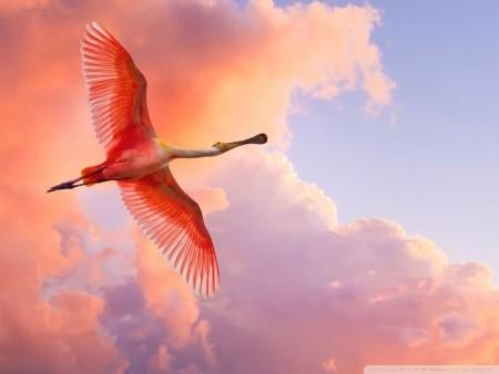 طيور جميلة جدا (1)