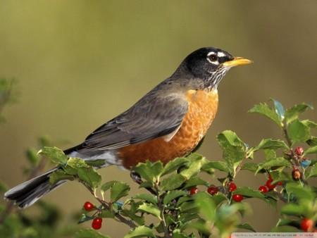 طيور جميلة جدا (4)