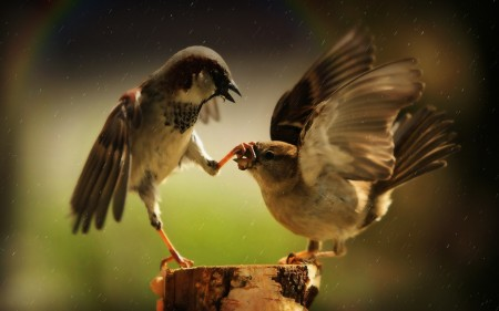 طيور جميلة ومميزة (3)