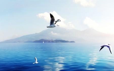 طيور جميلة ومميزة (4)