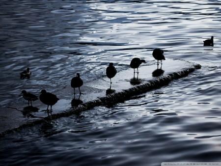 طيور جميلة ومميزة (5)