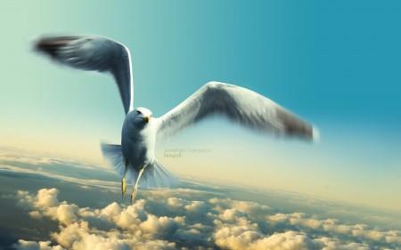 طيور ملونة (2)