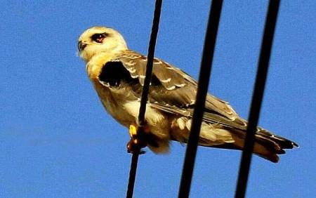 طيور ملونة (4)