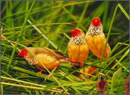طيور ملونة (5)