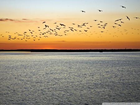 طيور وخلفيات جميلة (1)