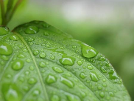 قطرات مطر (1)
