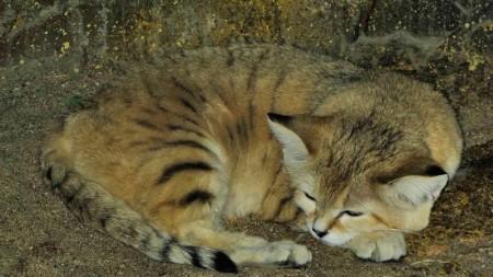 قطط جميلة (4)