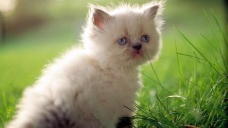 قطط كيوت (1)