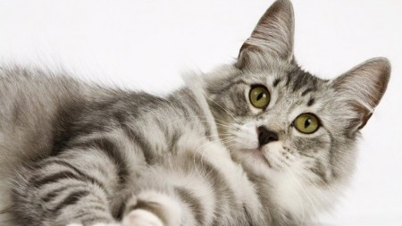 قطط كيوت (2)