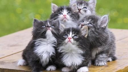 قطط كيوت (3)