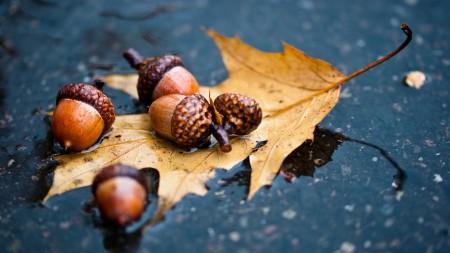 مطر الشتاء بالصور (4)