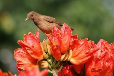 ورد احمر جميل (3)