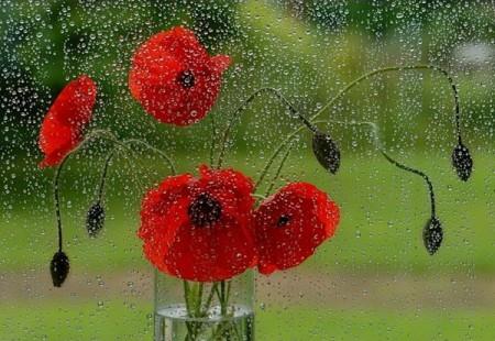 ورد احمر (3)