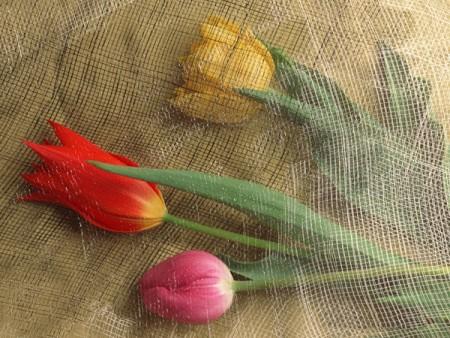 ورد جميل بالصور احلي خلفيات الورود والزهور (4)