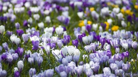 ورود جميلة وزهور اجمل (2)
