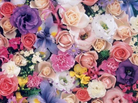 ورود جميلة وزهور اجمل (3)