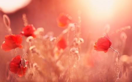 أجمل زهور (1)