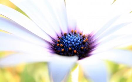 أجمل زهور (3)