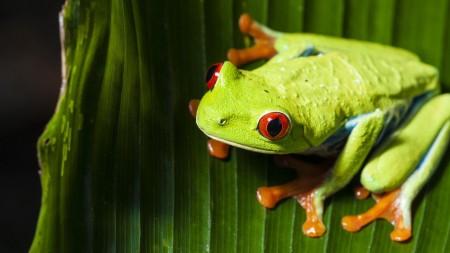 اجمل صور حيوانات (1)
