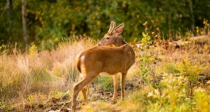 اجمل صور حيوانات (6)