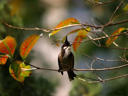 اجمل صور طيور (2)