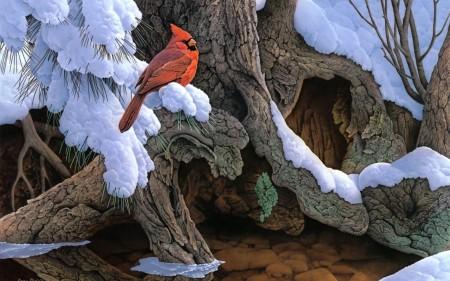 اجمل صور وخلفيات طيور HD (3)