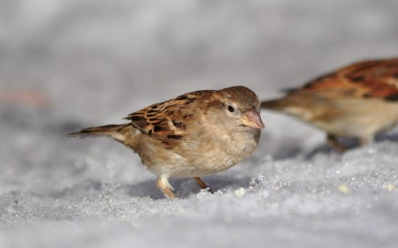 اجمل صور وخلفيات طيور HD (4)