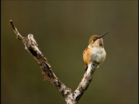 اجمل طيور الزينة (2)