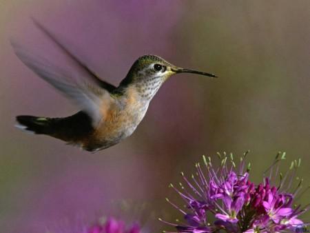 اجمل طيور الزينة (3)