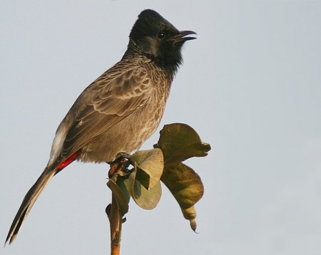 اجمل طيور (1)
