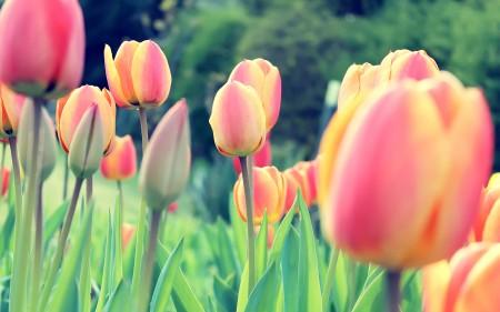 احلي صور زهور (2)