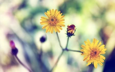 احلي صور زهور (3)