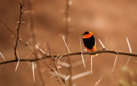 احلي صور طيور (3)
