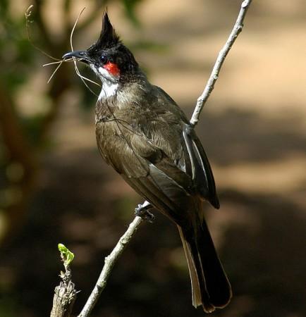 احلي طيور (2)