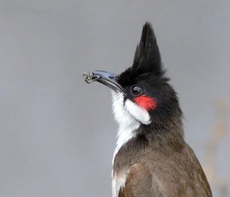احلي طيور (3)