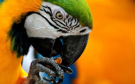 احلي عصافير (1)