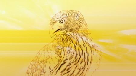 اشكال الطيور (3)