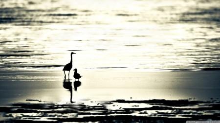 اشكال الطيور (5)