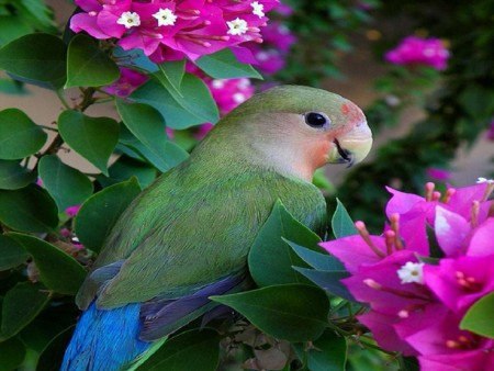 اشكال العصافير (2)