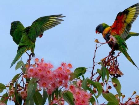 اشكال العصافير (3)