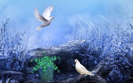 اشكال وانواع الطيور (2)