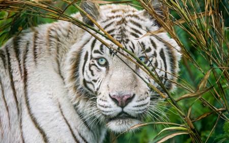 البوم صور حيوانات الغابة (4)