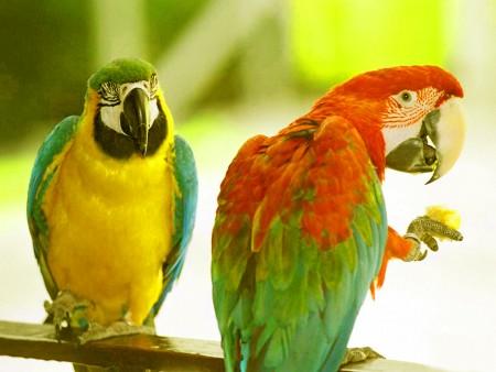 الوان العصافير (1)