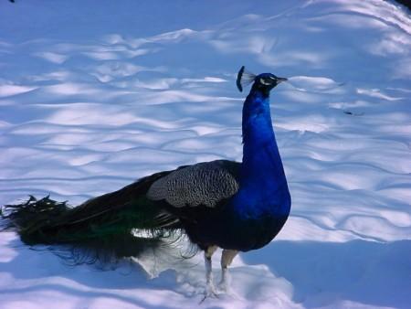 الوان العصافير (2)