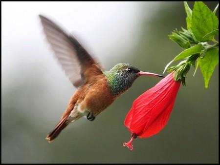الوان العصافير (3)