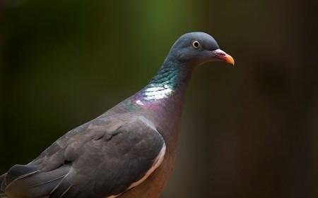 انواع الطيور (1)