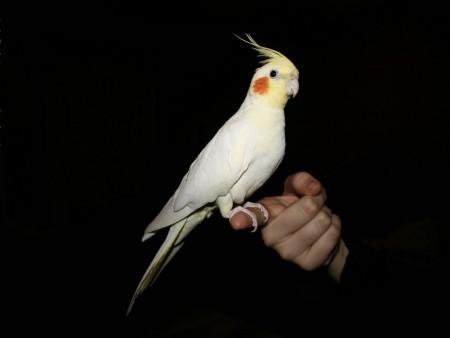 انواع الطيور (3)