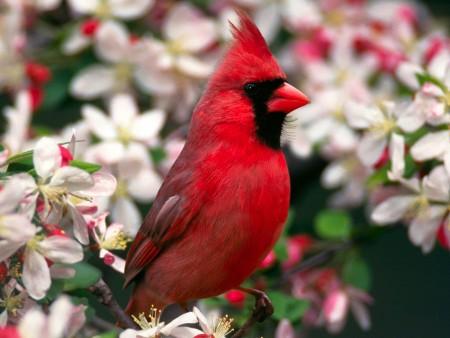 انواع الطيور (4)